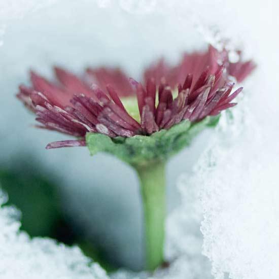 Криосауна — экстремальный холод