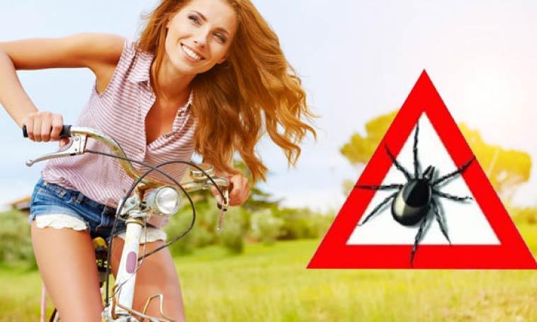 Клещи — правила безопасности или пусть встречи удастся избежать!